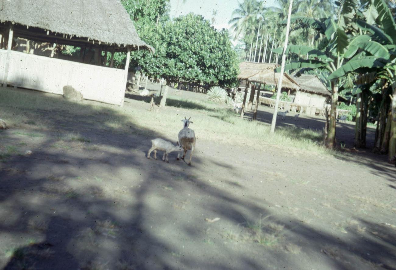 BD/289/55 - Beeld dorp met geiten